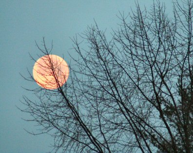 The largest full moon of 2009 appears from behind trees Sunday morning (Jan. 11, 2009) over Rolling Hills on Buchert Road, Sanatoga, looking west from Gerald Richards Park.