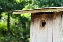 Bluebird Box Building February Project At Warwick Park