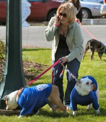 Handling two English bulldogs and a cell phone isn't impossible, but it can be a challenge.