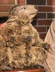 Gus, the Pennsylvania Lottery's groundhog mascot.